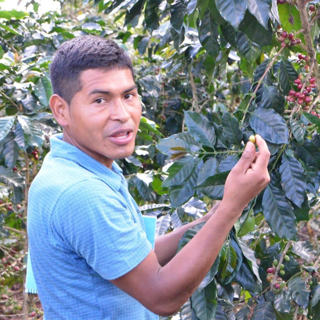 Ein Jugendlicher zeigt seine Kaffeebohnen am Strauch.