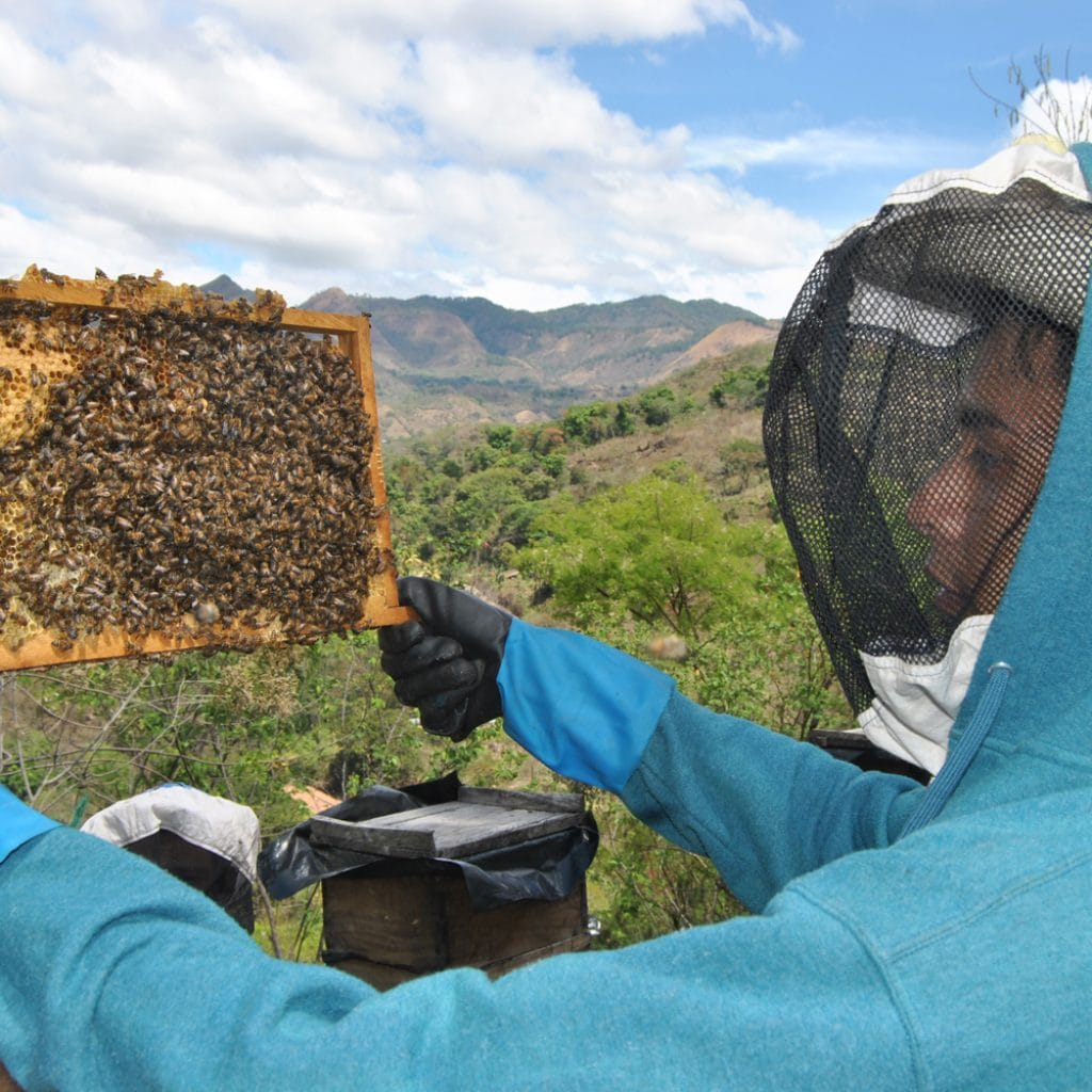A young man wearing gloves and a beekeeper's hat checks one of his hives.