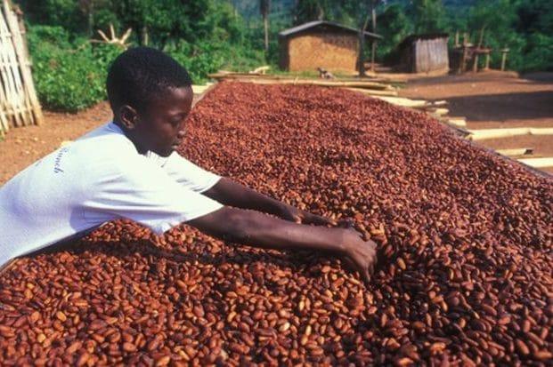 Ein Junge durchwühlt mit beiden Händen einen grossen Haufen Kakaubohnen.