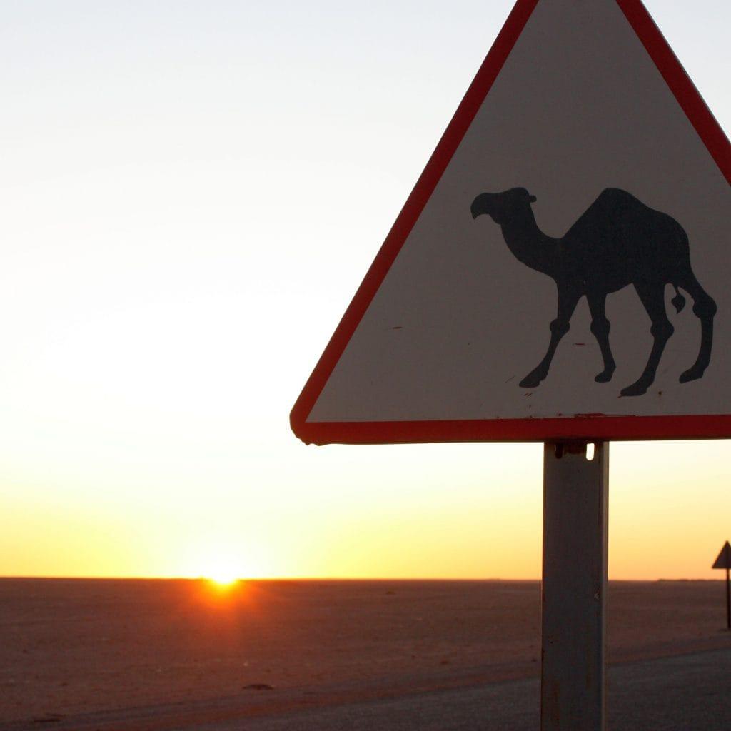 Sonnenuntergang im Hintergrund und eine Tafel mit der Warnung vor freilaufenden Kamelen.