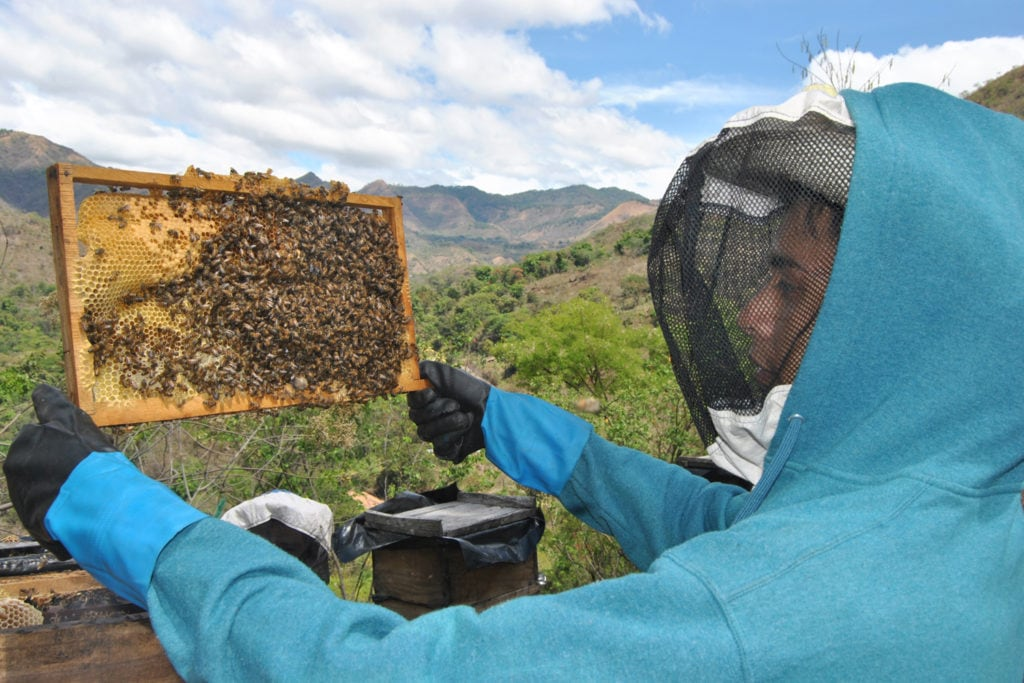 Ein Jugendlicher mit Handschuhen und Imkerhut kontrolliert einen seiner Bienenstöcke.A teenager with gloves and beekeeper hat inspects one of his beehives.