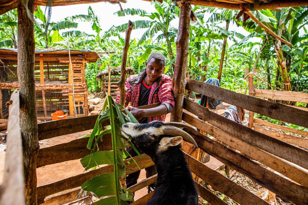 Mberwa füttert die Ziege